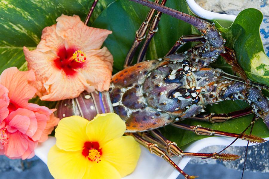 closed season lobster 1