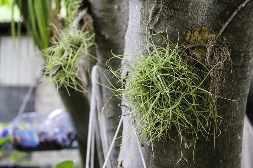 Rosmac's Herb Garden 2