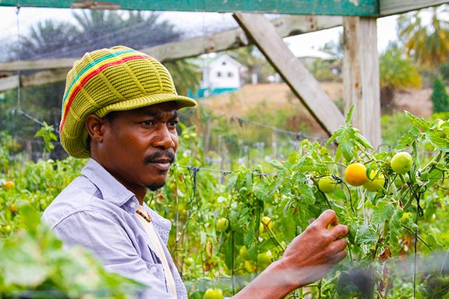 colesome farmers market 5
